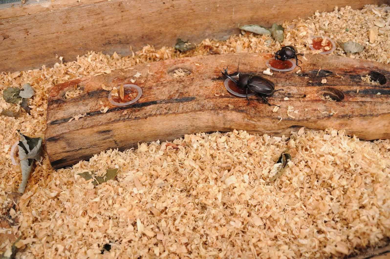 手塚貴晴+手塚由比,十日町市立里山科學館「森林學校」,介紹松之山區域自然與文化的自然科學館,裡面最讓我驚訝的甲蟲就這樣近距離讓遊客接觸,也第一次了解他們食物,處處充滿驚喜 十日町市立里山科學館 十日町市立里山科學館/森林學校 echigo matsunoyama museum of natural science 07