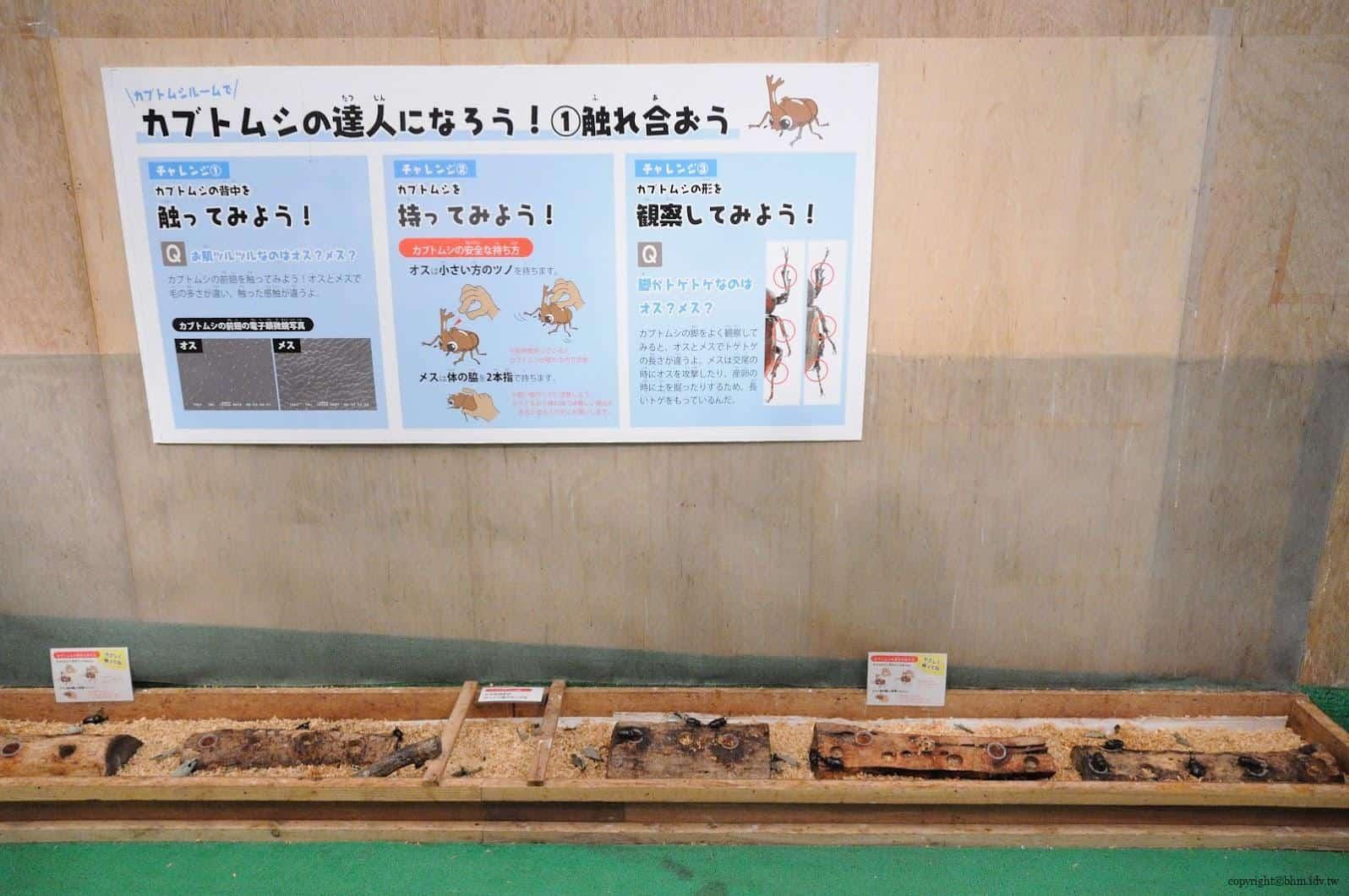 手塚貴晴+手塚由比,十日町市立里山科學館「森林學校」,介紹松之山區域自然與文化的自然科學館,裡面最讓我驚訝的甲蟲就這樣近距離讓遊客接觸,也第一次了解他們食物,處處充滿驚喜 十日町市立里山科學館 十日町市立里山科學館/森林學校 echigo matsunoyama museum of natural science 22