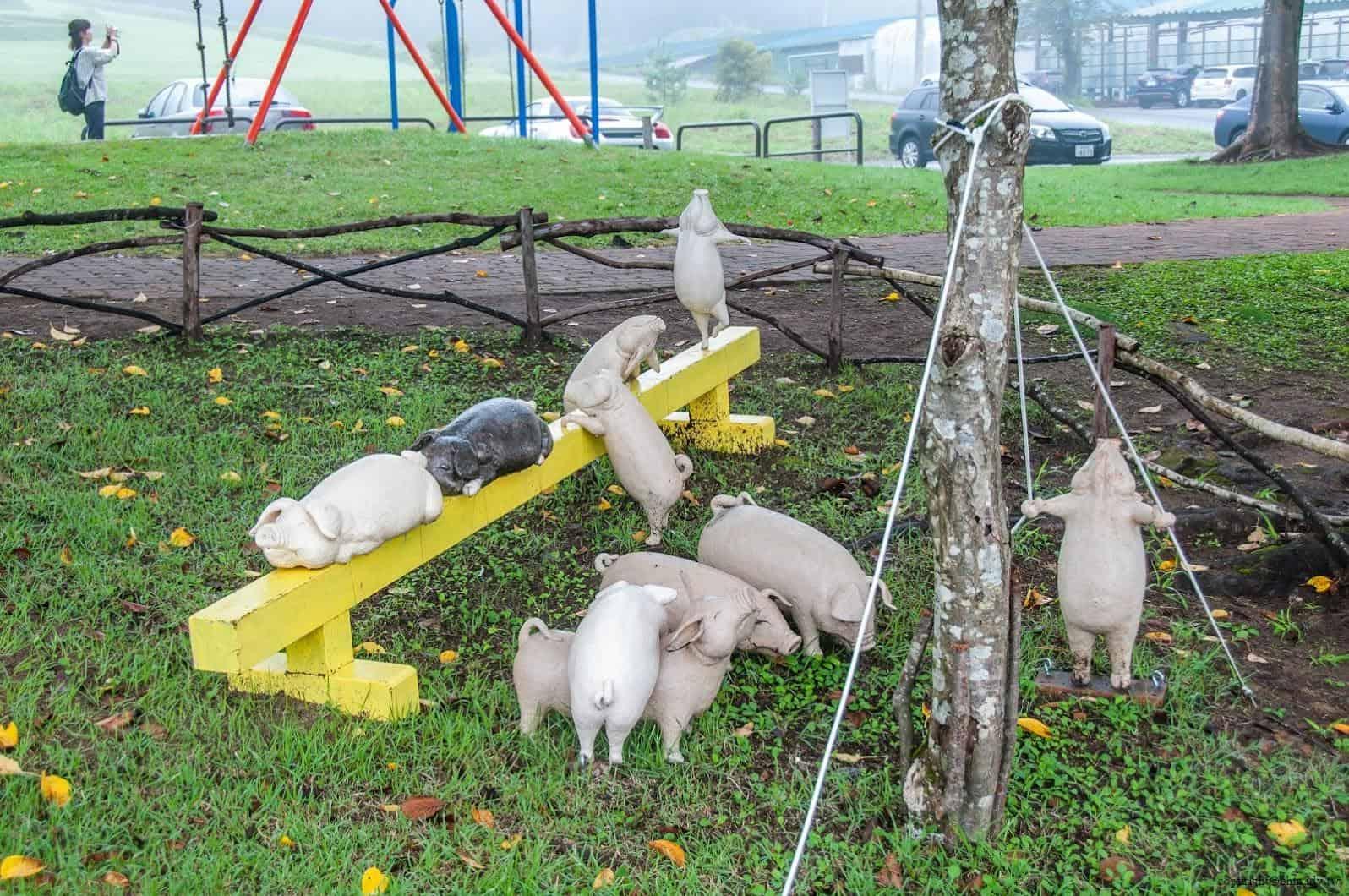 岡山富男,馬戲團@里山藝術動物園,每隻豬的動作與表情各有其風景 里山藝術動物園 里山藝術動物園 satoyama art zoo 06